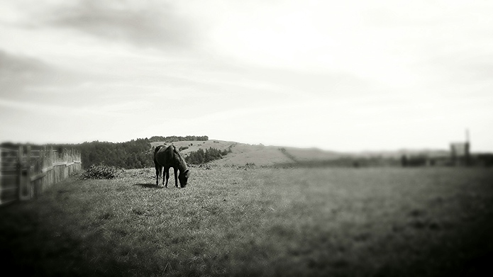 Horse on the hill